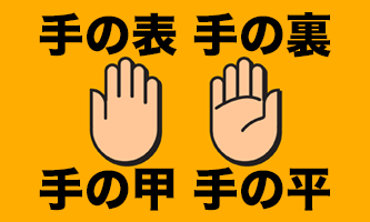 手の表」と「手の裏」どこが「手の甲」「手の平」? | 言葉の救急箱